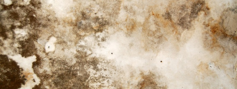 Mold Remediation – Remove mold from homes, basements, or